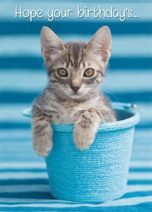 Birthday Card, Kitty in Blue Pail-birthday, card, kitty, kitten, cat, blue, pail