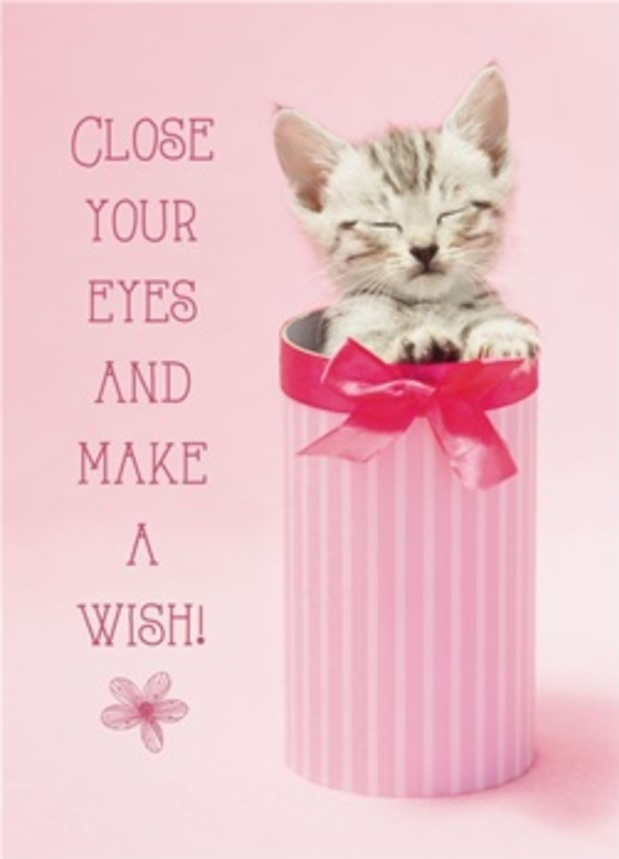 Birthday Card, Kitten in Pink Canister-birthday, card, kitten, pink, canister, kitty, cat