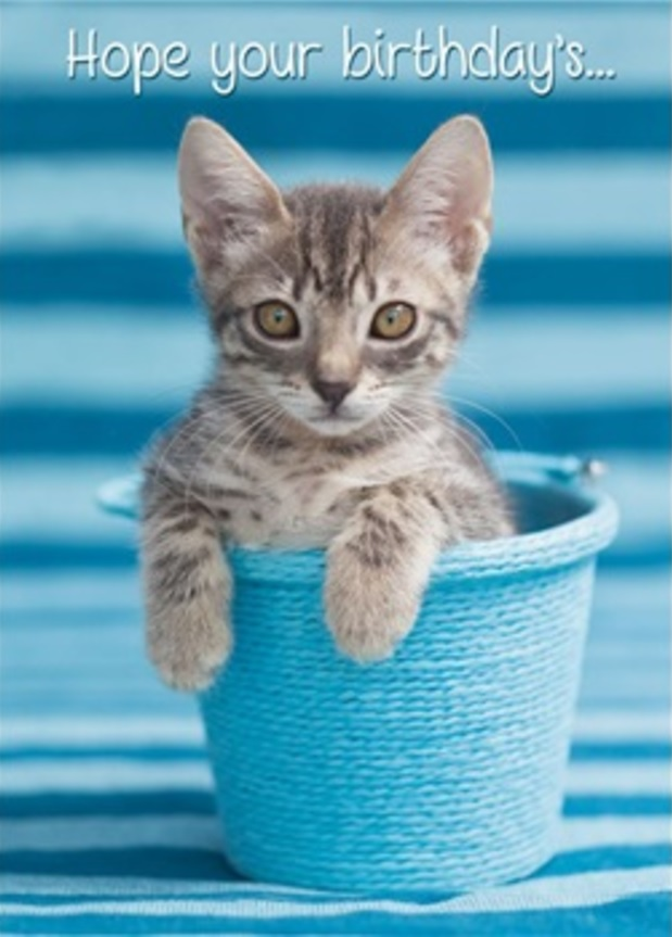 Birthday Card, Kitty in Blue Pail-birthday, card, kitty, kitten, cat, blue, pail