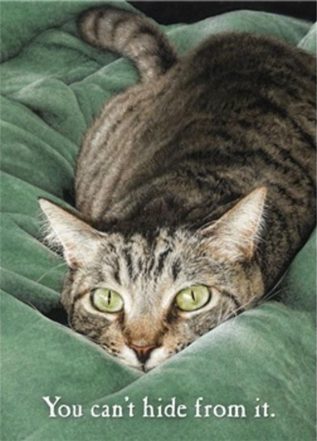 Birthday Card, Torpedo Cat-birthday, card, torpedo, cat, kitty, kitten